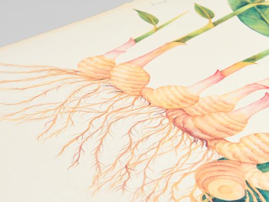 RJ Paper | Fine art print